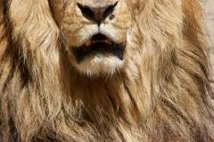Koning Kongo